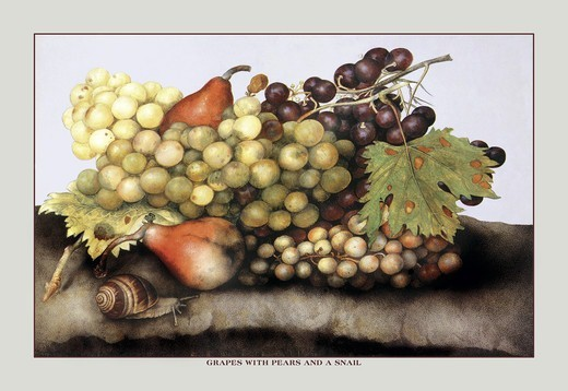 Grapes and Pears with a Snail, Giovanna Garzoni : Stock Photo