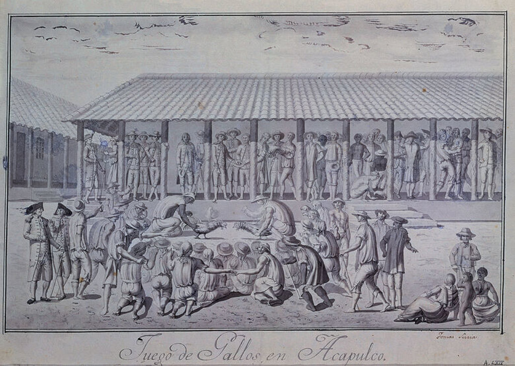 Stock Photo: 4409-16436 JUEGO DE GALLOS EN ACAPULCO - PELEA DE GALLOS EN ACAPULCO - SIGLO XVIII - EXPEDICION MALASPINA. Author: SURIA TOMAS. Location: MUSEO NAVAL / MINISTERIO DE MARINA, MADRID, SPAIN.