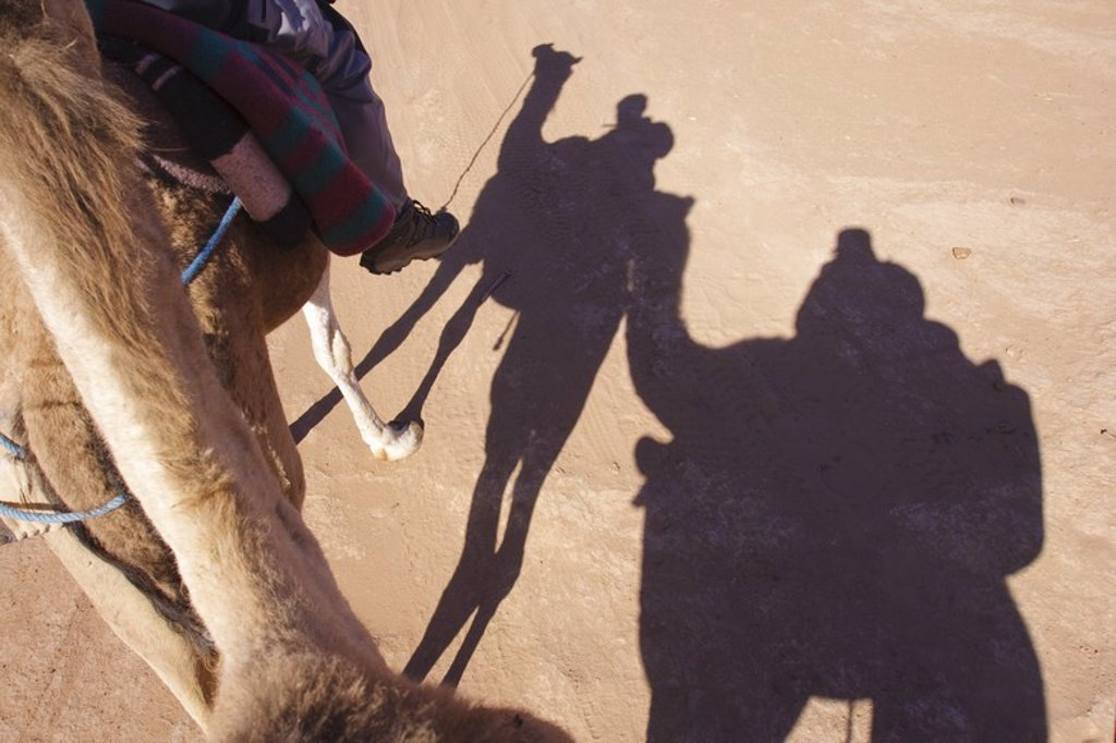 Stock Photo: 4409-32256 Caravan of dromedary in Erg Lihoudi. M'Hamid. Morocco.