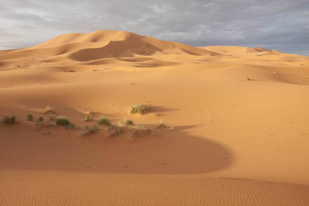 Stock Photo: 4409-32474 Dunes in Erg Chebbi desert. Morocco.