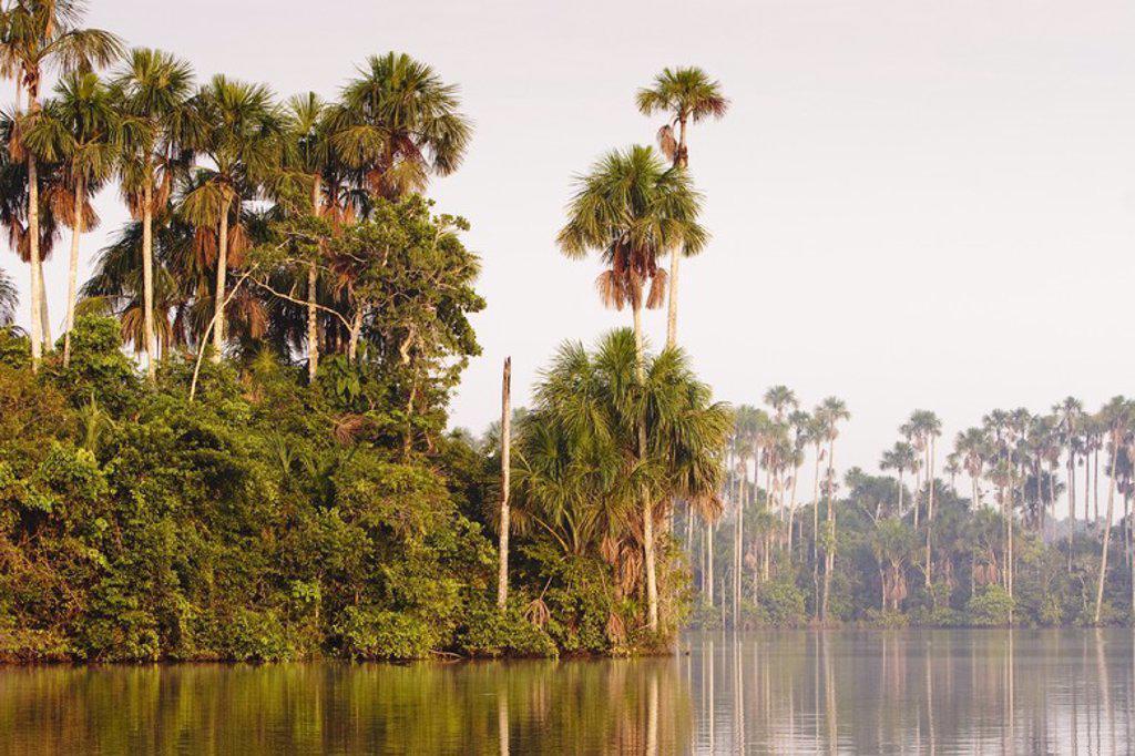 Sandoval Lake. Tambopata Natural Reserve. Madre de Dios Departament. Peru. : Stock Photo