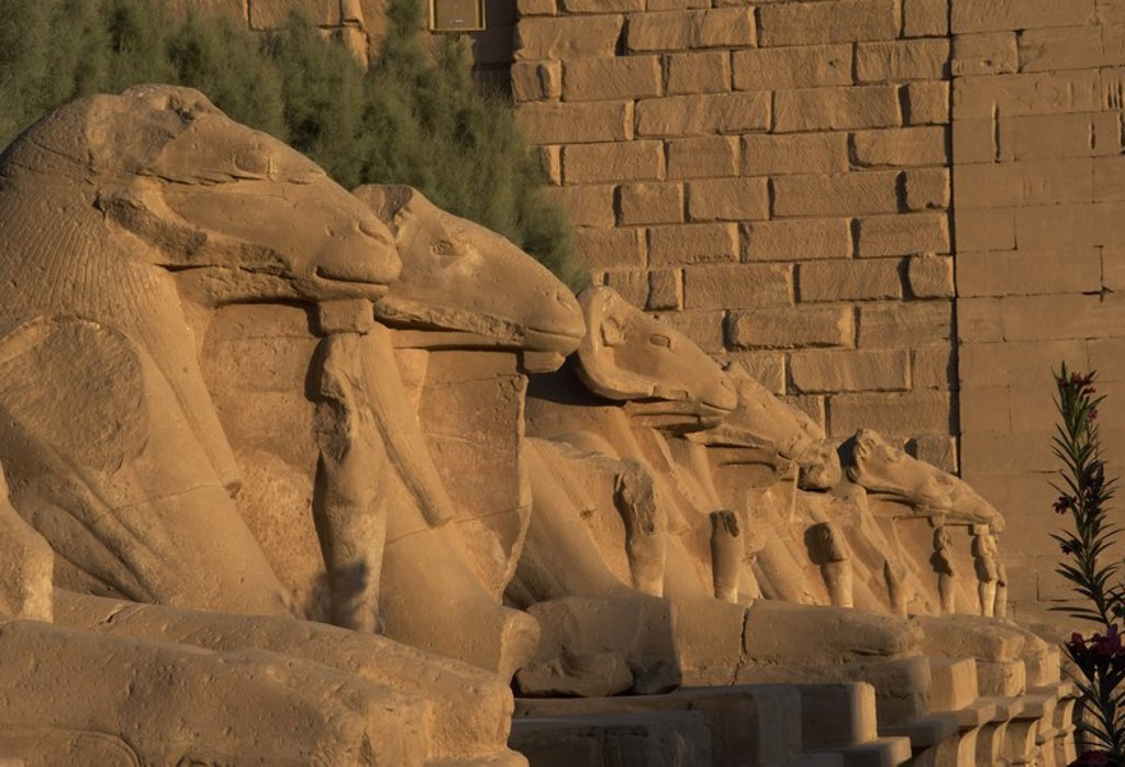 Egyptian Art. Karnak Temple. Avenue of sphinxes with ram's head (symbol of the god Amon). Built during the reign of Ramses II. 19th Dynasty. New Kingdom. Around Luxor. Egypt. : Stock Photo