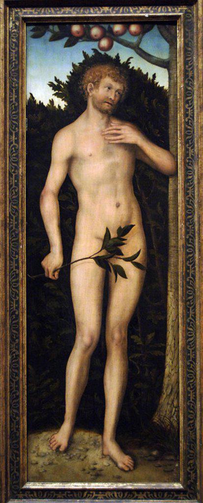 """Stock Photo: 4409-39413 ARTE RENACIMIENTO. ALEMANIA. LUCAS CRANACH """"EL VIEJO"""" (Kronach, 1472-Weimar, 1553). Pintor y grabador alemán. """"ADAN"""" (1533-1537). Instituto de Arte de Chicago. Estado de Illinois. Estados Unidos."""