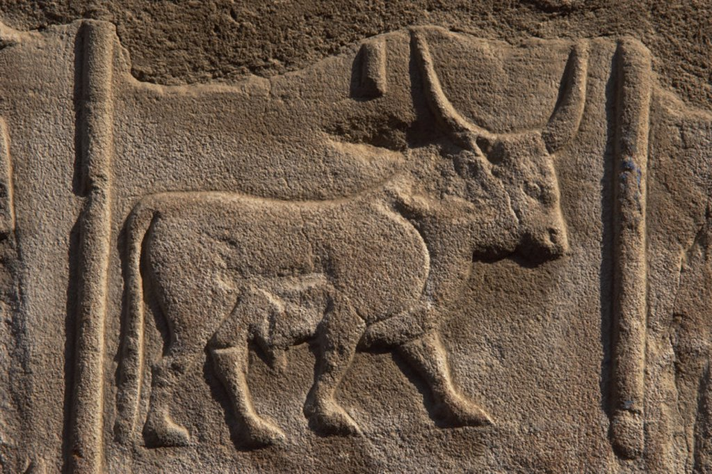Stock Photo: 4409-40892 Hieroglyphic writing. EGYPT. Detail of a wall of the first court of Ramses II decorated with a drawing hieroglyph shaped like a bull. TEMPLE OF LUXOR. Dynasty XIX. (1320-1200 B.C.). New Empire.