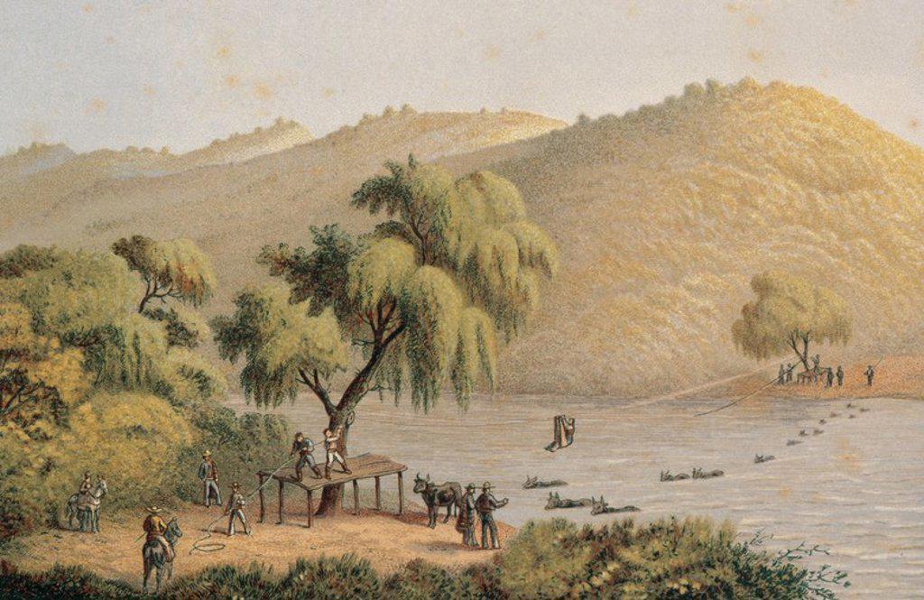 Stock Photo: 4409-44009 HISTORIA DE MEXICO. Ganado atravesando el río San Marcos, en el estado de Puebla. Grabado de principios S. XIX.