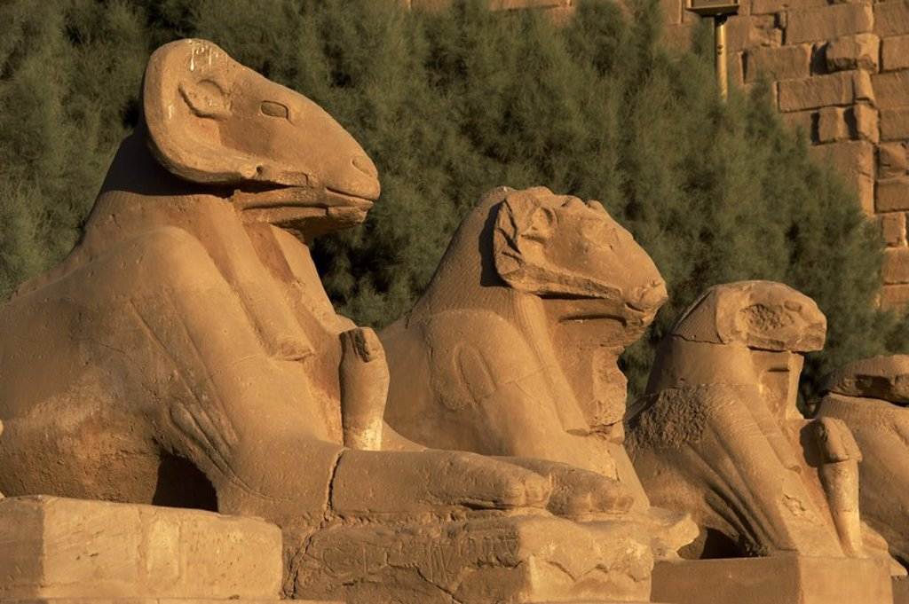 Stock Photo: 4409-47606 Egyptian Art. Karnak Temple. Avenue of sphinxes with ram's head (symbol of the god Amon). Built during the reign of Ramses II. 19th Dynasty. New Kingdom. Around Luxor. Egypt.