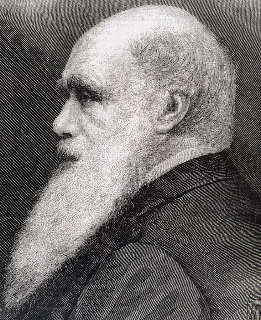 CHARLES ROBERT DARWIN (1809-1882). Naturalista británico. Autor de la obra 'El origen de las especies', publicada en el año 1859. S. XIX. Grabado. : Stock Photo
