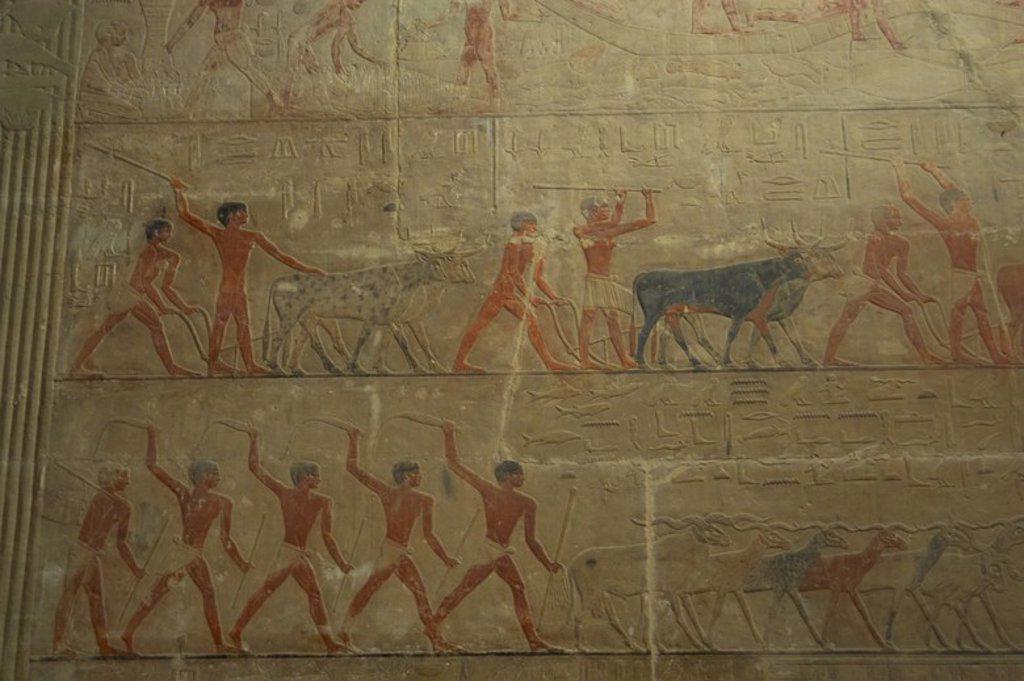 Egypt. Saqqara. Mastaba of Ti. 5th Dynasty. Relief depicting ranching scene. : Stock Photo