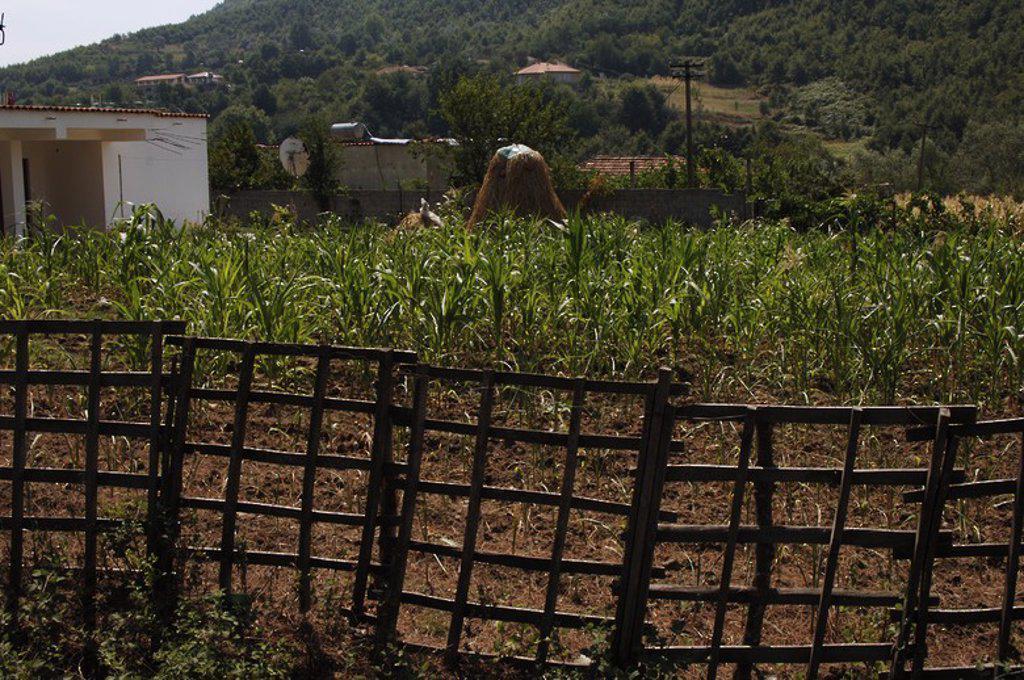 Stock Photo: 4409-60848 Terreno de cultivo entre Tirana y Elbasan. República de Albania.