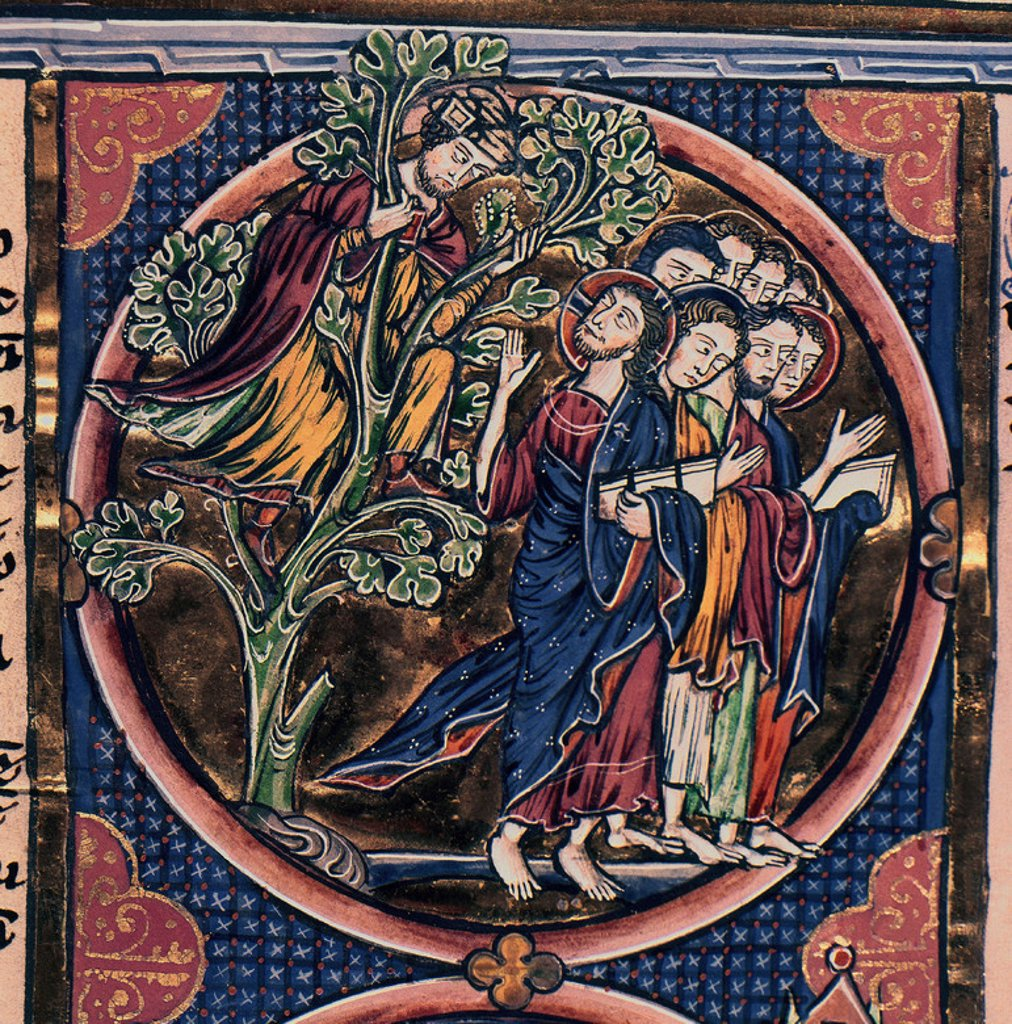 Bible of King Louis of France. Zacchaeus in a Tree. 13th century. Gothic Miniature. Library of Toledo Cathedral. Location: CATEDRAL-BIBLIOTECA, TOLEDO, SPAIN. : Stock Photo
