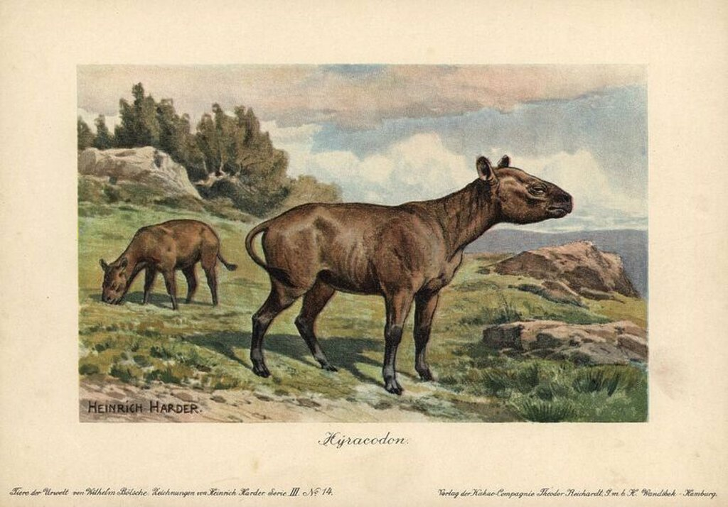 "Hyracodon, an extinct genus of fast-running, pony-like mammal. Colour printed (chromolithograph) illustration by Heinrich Harder from ""Tiere der Urwelt"" Animals of the Prehistoric World, 1916, Hamburg. Heinrich Harder (1858-1935) was a German landscape artist and book illustrator. From a series of prehistoric creature cards published by the Reichardt Cocoa company. Natural historian Wilhelm Bolsche wrote the descriptive text. : Stock Photo"