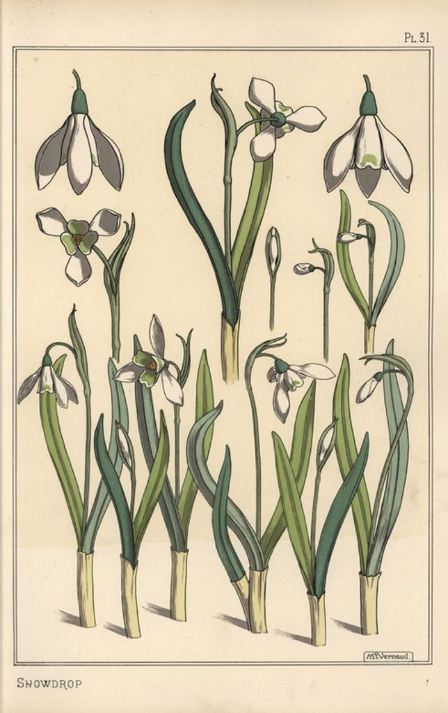 """Botanical illustration of a snowdrop, Galanthus nivalis. Lithograph by Verneuil with pochoir (stencil) handcoloring from Eugene Grasset's """"Plants and their Application to Ornament,"""" Paris, 1897. Grasset (1841-1917) was a Swiss artist whose innovative designs inspired the """"art nouveau"""" movement at the end of the 19th century. : Stock Photo"""