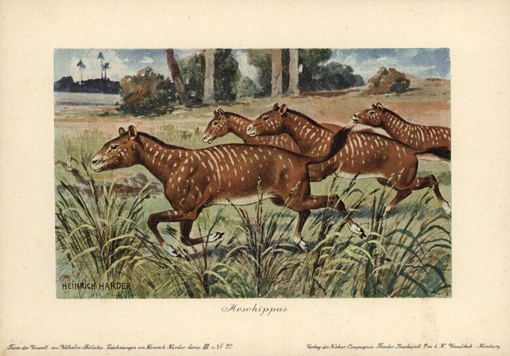"Stock Photo: 4409-66291 Mesohippus, extinct genus of early horse that lived from the Eocene to Oligocene epoch. Colour printed (chromolithograph) illustration by Heinrich Harder from ""Tiere der Urwelt"" Animals of the Prehistoric World, 1916, Hamburg. Heinrich Harder (1858-1935) was a German landscape artist and book illustrator. From a series of prehistoric creature cards published by the Reichardt Cocoa company. Natural historian Wilhelm Bolsche wrote the descriptive text."