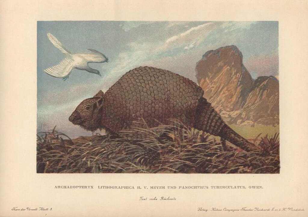 "Panochthus tuberculatus, an extinct type of glyptodont, native to Argentina during the Pleistocene epoch. An Archaeopteryx lithographica flies in the background.. . Colour printed illustration by Heinrich Harder from ""Tiere der Urwelt"" Animals of the Prehistoric World, 1920, Hamburg. Heinrich Harder (1858-1935) was a German landscape artist and book illustrator. From a series of prehistoric creature cards published by the Reichardt Cocoa company. Natural historian Wilhelm Bolsche wrote the descr : Stock Photo"