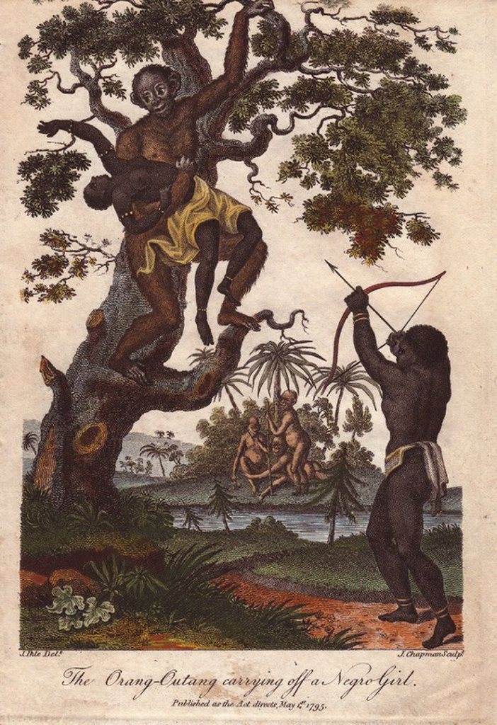 "An orang utan (Pongo pygmaeus) kidnapping a young girl. A native takes aim with bow and arrow at the ape. . . Hand-colored copperplate engraving from a drawing by Johann Ihle from Ebenezer Sibly's ""Universal System of Natural History"" 1795. . . The prolific Sibly published his Universal System of Natural History in 1794~1796 in five volumes covering the three natural worlds of fauna, flora and geology. The series included illustrations of mythical beasts such as the sukotyro and the mermaid, and : Stock Photo"