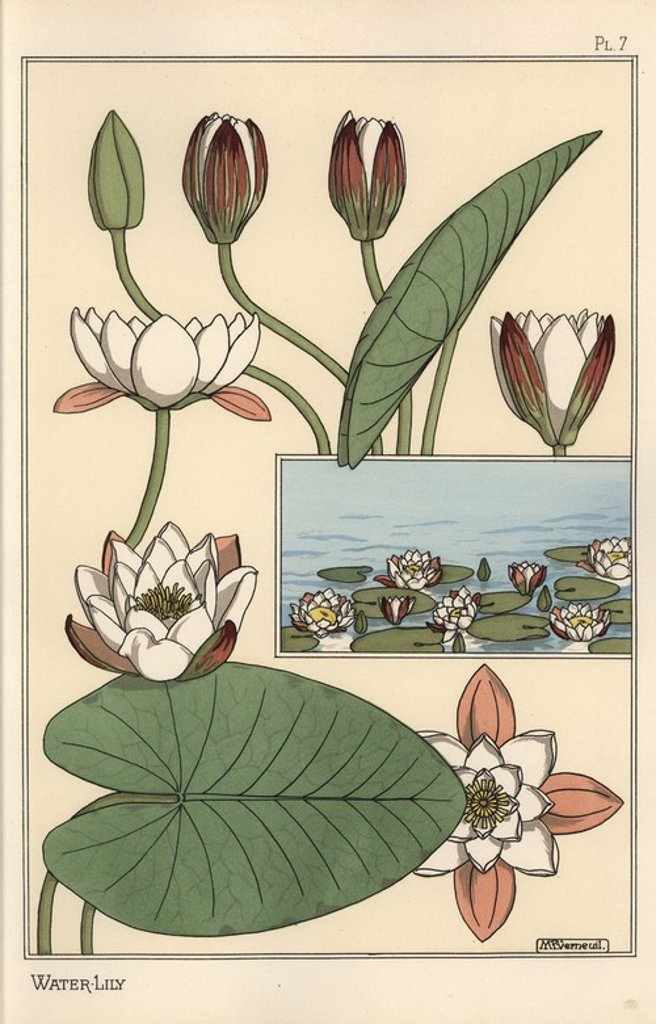 "Stock Photo: 4409-67951 The water lily, Nelumbo lutea, and flower parts. Lithograph by Verneuil with pochoir (stencil) handcoloring from Eugene Grasset's ""Plants and their Application to Ornament,"" Paris, 1897. Grasset (1841-1917) was a Swiss artist whose innovative designs inspired the ""art nouveau"" movement at the end of the 19th century."