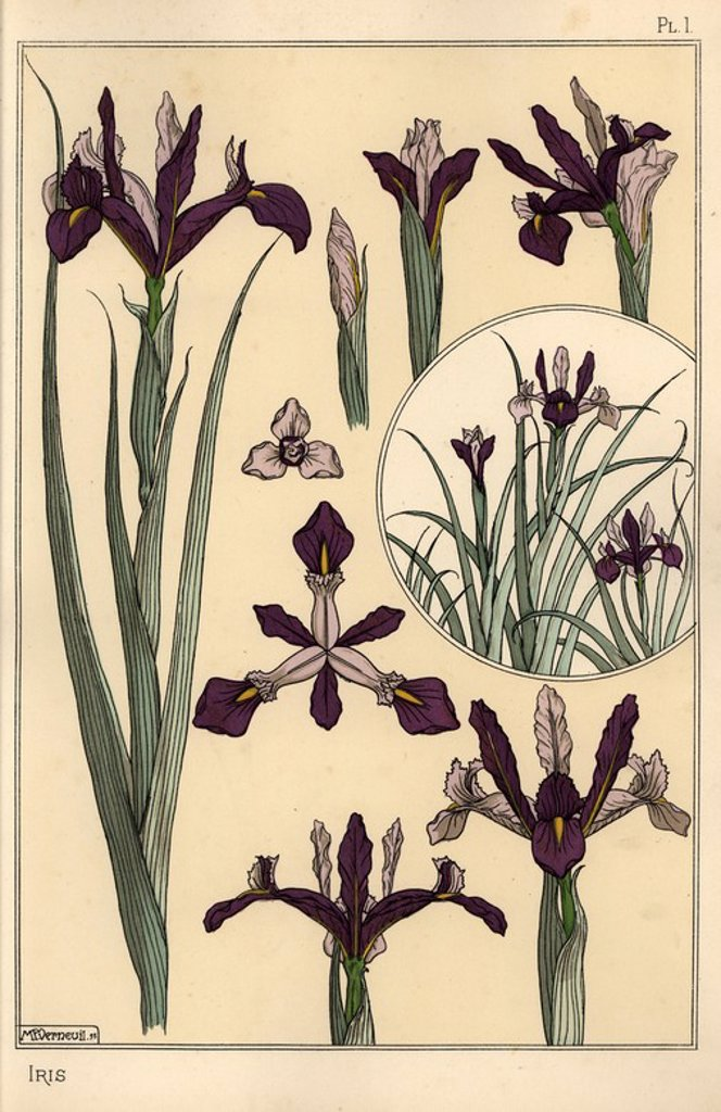 "Iris plant and flower parts, with inset.. Lithograph by Verneuil with pochoir (stencil) handcoloring from Eugene Grasset's ""Plants and their Application to Ornament,"" Paris, 1897. Eugene Grasset (1841-1917) was a Swiss artist whose innovative designs inspired the ""art nouveau"" movement at the end of the 19th century. : Stock Photo"