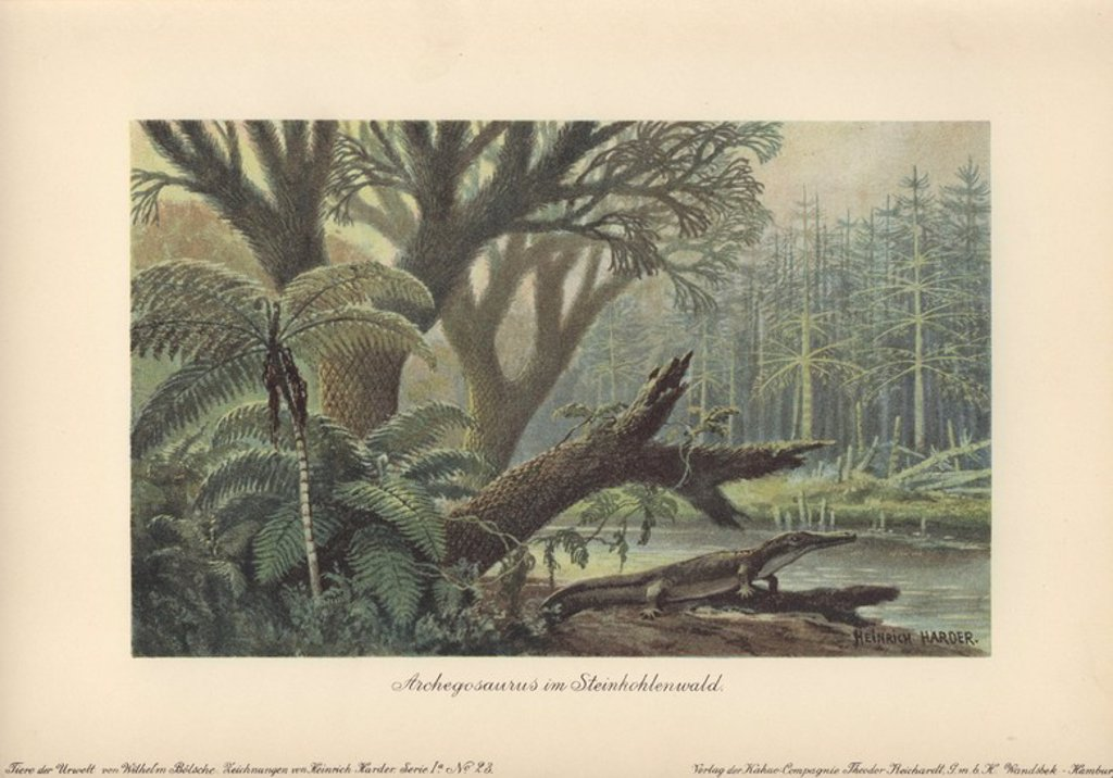"An archegosaurus by a river bank in a tropical primordial jungle of ferns and pines. . . Archegosaurus is a genus of amphibian which lived during the Asselian to Wuchiapingian ages of the Permian era. Extinct. . . Colour printed illustration by Heinrich Harder from ""Tiere der Urwelt"" Animals of the Prehistoric World, 1916, Hamburg. Heinrich Harder (1858-1935) was a German landscape artist and book illustrator. From a series of prehistoric creature cards published by the Reichardt Cocoa company.  : Stock Photo"