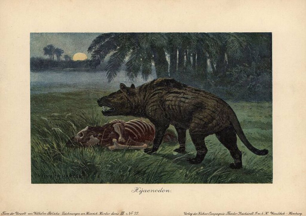 "Stock Photo: 4409-70460 Hyaenodon, extinct genus of carnivorous creodonts. Colour printed (chromolithograph) illustration by Heinrich Harder from ""Tiere der Urwelt"" Animals of the Prehistoric World, 1916, Hamburg. Heinrich Harder (1858-1935) was a German landscape artist and book illustrator. From a series of prehistoric creature cards published by the Reichardt Cocoa company. Natural historian Wilhelm Bolsche wrote the descriptive text."