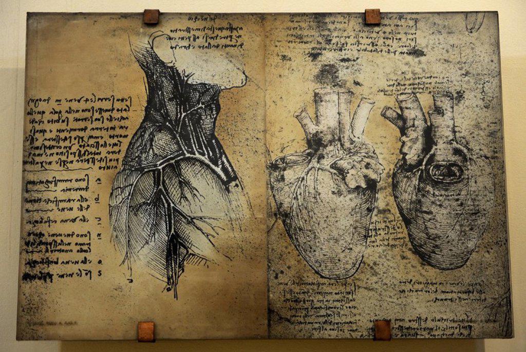 """Stock Photo: 4409-72864 h""""ESTUDIO DEL CORAZON"""". Leonardo Da Vinci, estudia el corazón y el sistema circulatorio a través de disecciones de animales. Se analiza la estructura y el funcionamiento de las válvulas del corazón, también recurriendo a sus conocimientos en el campo de la hidráulica. Museo Nacional de la Ciencia y la Tecnología Leonardo Da Vinci. Milán. Italia. Original en le Royal Library 19013, 1510-1513 de Windsor. Inglaterra."""