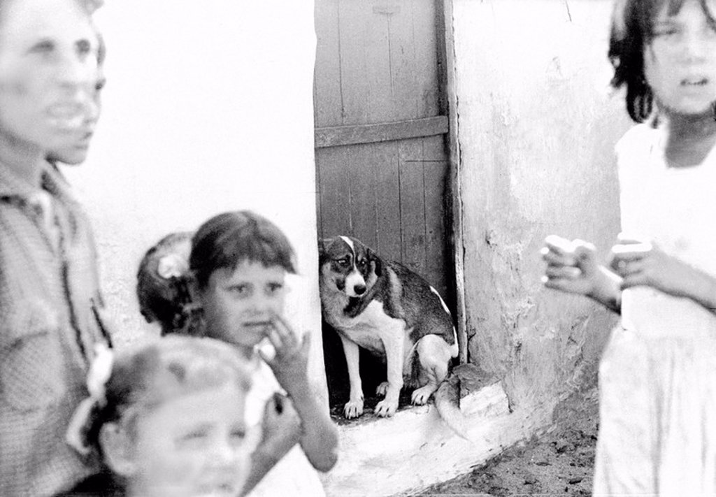 A dog at the Somorrostro gypsy neighborhood of Barcelona in 1962. : Stock Photo