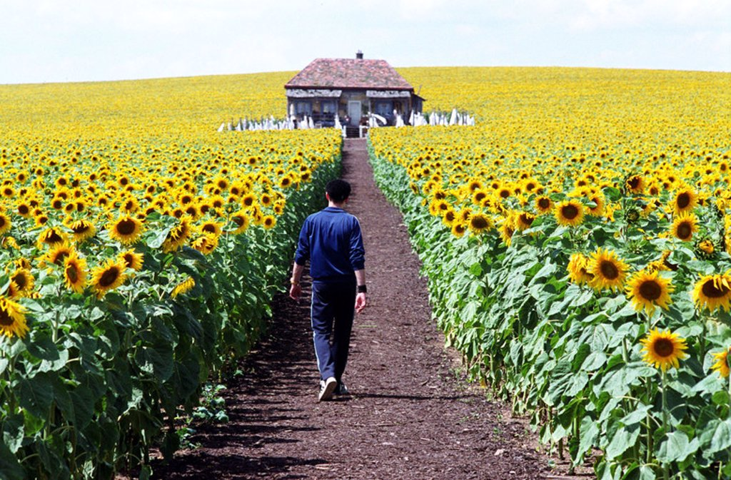 Stock Photo: 4409-93926 Original Film Title: EVERYTHING IS ILLUMINATED. English Title: EVERYTHING IS ILLUMINATED. Film Director: LIEV SCHREIBER. Year: 2005. Stars: EUGENE HUTZ.