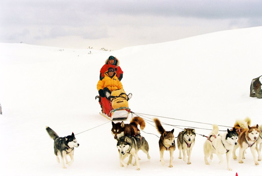 Original Film Title: EIGHT BELOW. English Title: EIGHT BELOW. Film Director: FRANK MARSHALL. Year: 2006. Stars: BRUCE GREENWOOD; PAUL WALKER. : Stock Photo