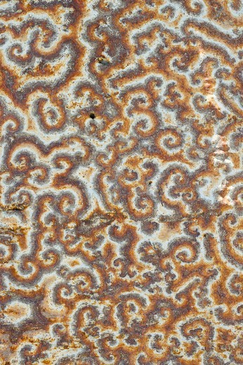 Pattern on bark of endemic baobab (Adansonia sp.) caused by peculiar fungal growth, Andavadoaka, Madagascar : Stock Photo
