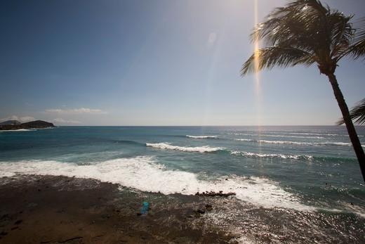 Stock Photo: 4411-1545 Hawaii, USA,Palm trees along ocean