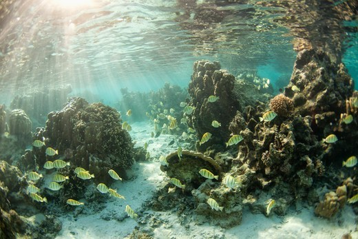 Stock Photo: 4411-3197 Teahupoo,Sea Life Underwater