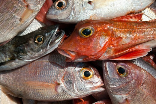 Stock Photo: 4411-5337 Fish-Catch Of The Day, Morocco,Atlantic Ocean, Safi, Morocco