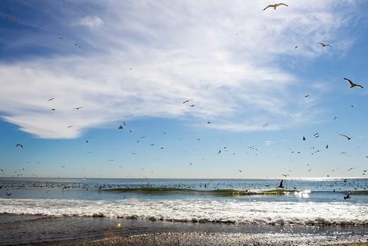 Seagulls Over The Ocean, Doheny Park, Doheney Park, Dana Point, California, USA : Stock Photo
