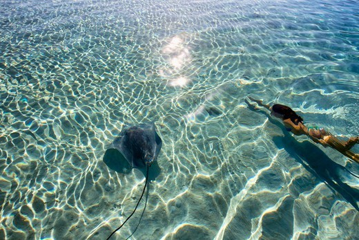 Stock Photo: 4411-6228 Young Woman Swimming With Stingray In Pristine Lagoon,Moorea, Tahiti, French Polynesia, South Pcific Ocean