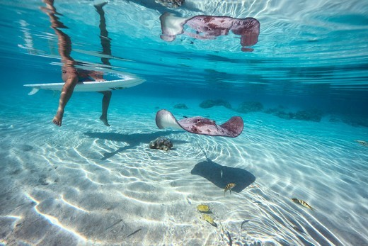 Girl On A Surfboard With Stingrays In Turquoise Lagoon,Moorea, Tahiti, French Polynesia, South Pcific Ocean : Stock Photo