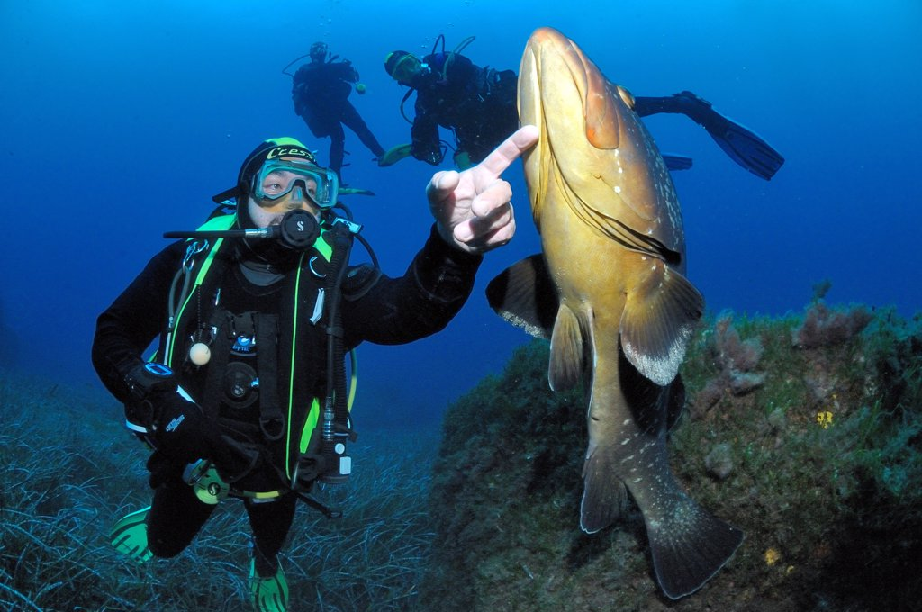 Stock Photo: 4413-100067 Diver stroking a brown Grouper Mediterranean Port-Cros