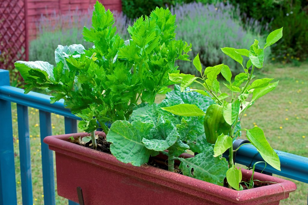 Vegetables on a flower container on a garden terrace : Stock Photo
