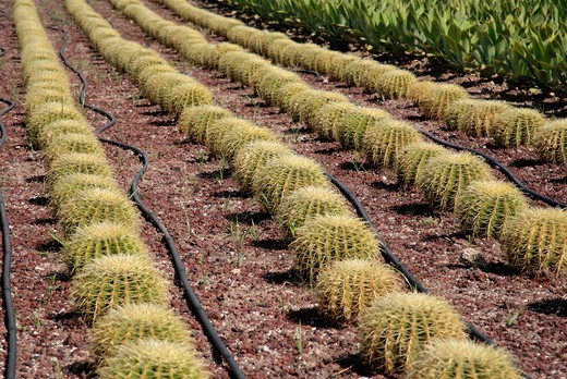 A flower bed full of cactus at Antalya airport Turkey : Stock Photo