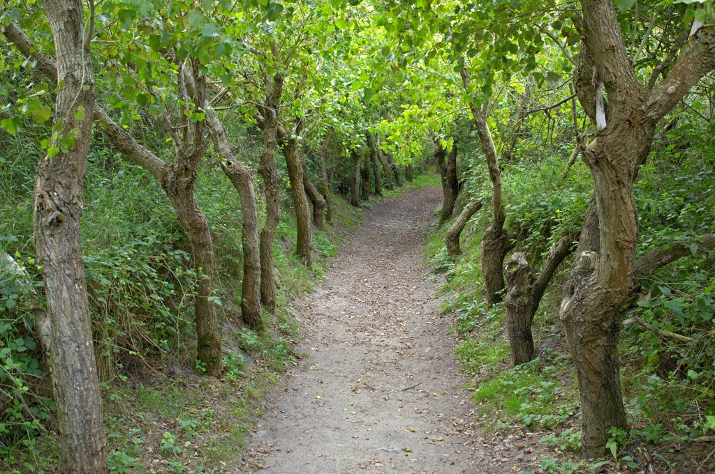 Tree-bordered way in Marquenterre Park Somme : Stock Photo