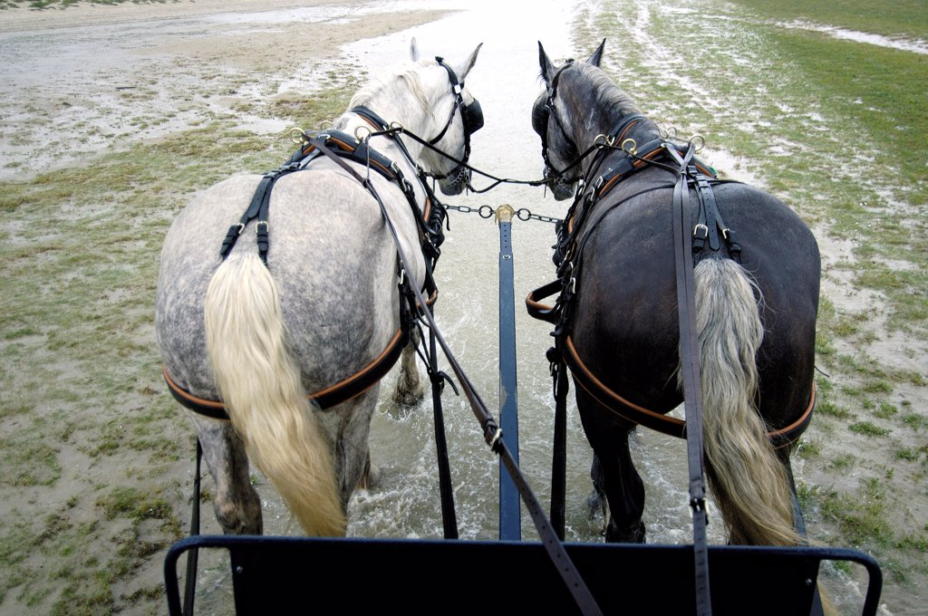 Stock Photo: 4413-11727 Horse hitch promenade on the foreshore Baie de Somme France