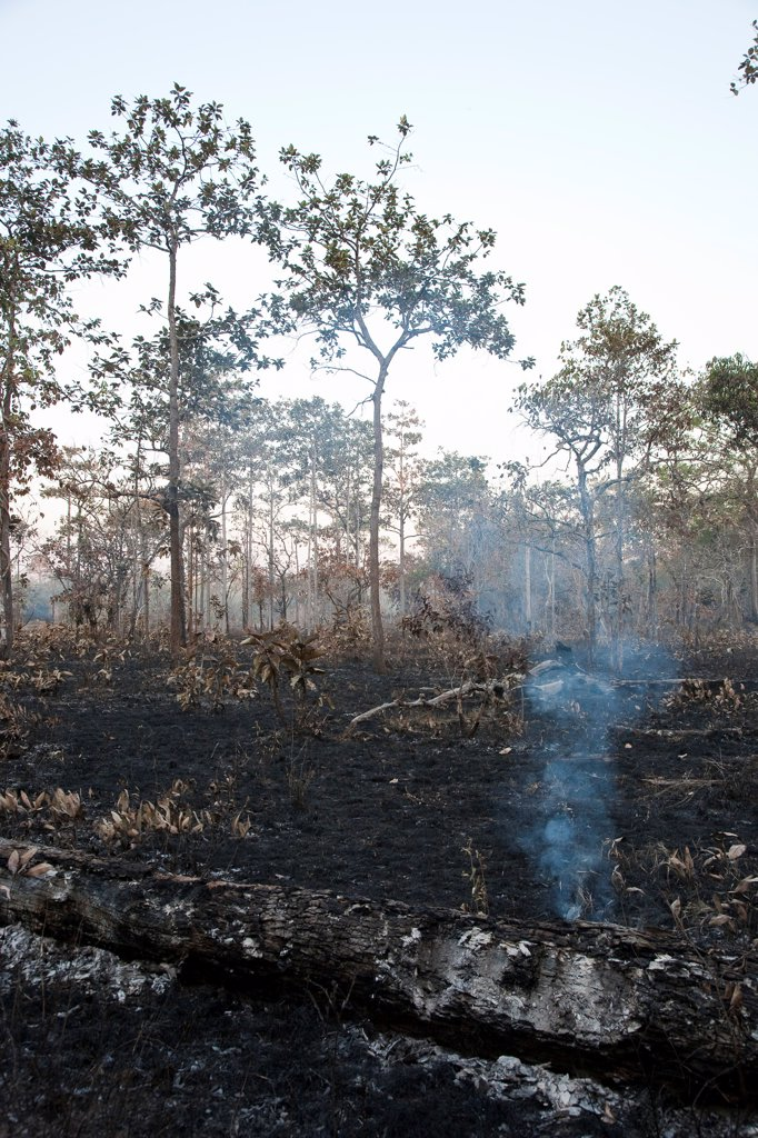Stock Photo: 4413-118670 Burn farming along the Virachay NP Cambodia