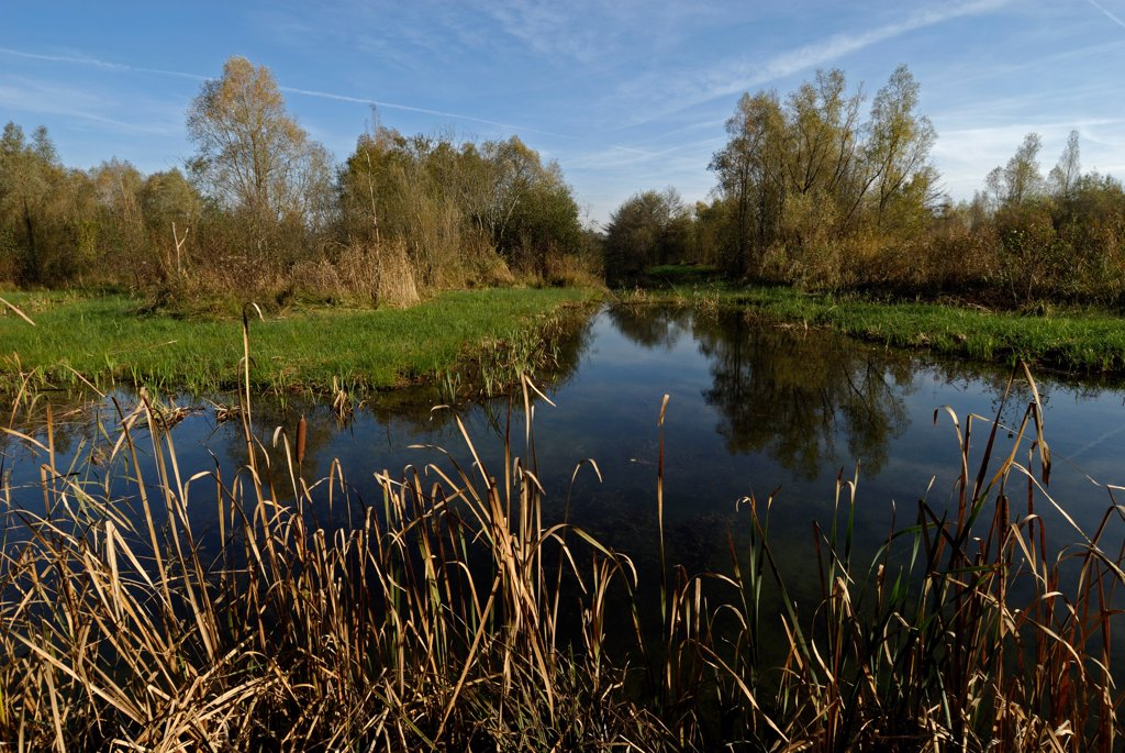 Swamp in autumn Brognard Doubs France : Stock Photo
