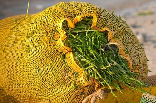 Stock Photo: 4413-135145 Salicornia bag in Baie de Somme Picardie France