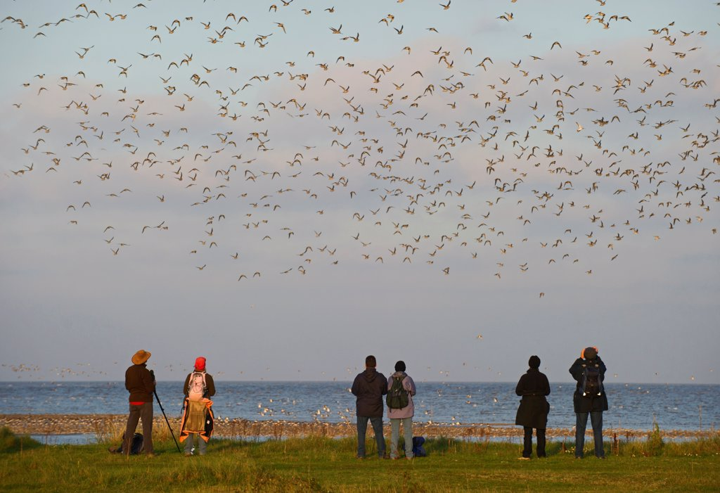 Birdwatchers watching waders over the Wash Norfolk UK : Stock Photo