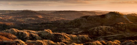 Stock Photo: 4413-146835 Dune heathland near Quend-Beach in the Somme