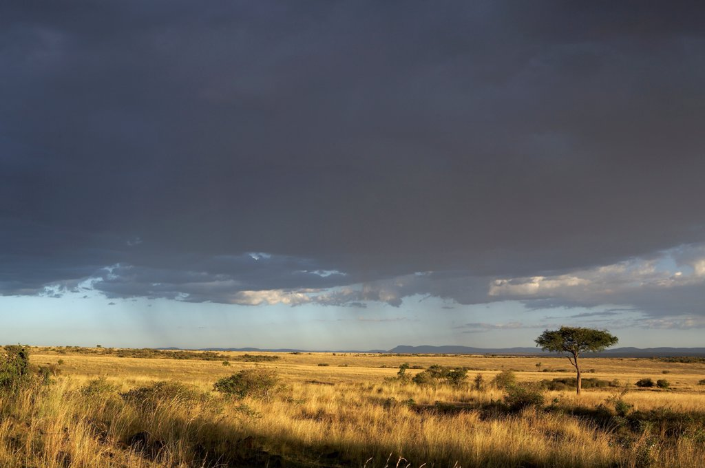 Stock Photo: 4413-14788 Rain on Masaï Mara reserve Kenya
