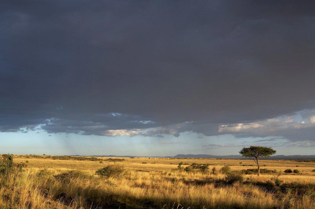 Rain on Masaï Mara reserve Kenya : Stock Photo