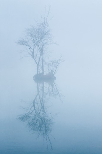 Stock Photo: 4413-199805 Marshes of the Somme in fog France