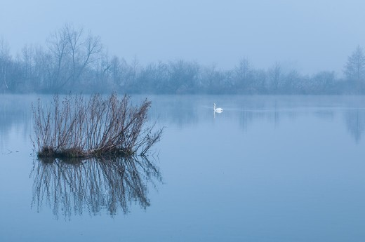 Marshes of the Somme in fog France : Stock Photo