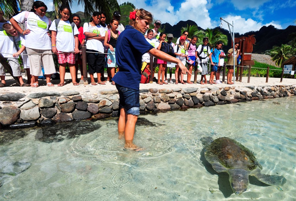 Stock Photo: 4413-200083 Schoolchildren Trainer and Sea Turtle Moorea Polynesia