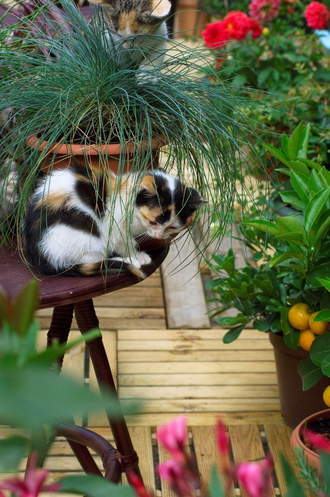 2 months female kitten on a garden table : Stock Photo